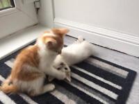 Kittens boys & girls