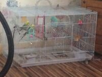 2x male budgies and cage