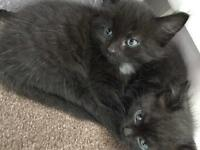 8week old kittens