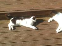 2 cats available to a good home
