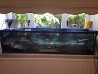 6 foot Aquarium tank & sera filter