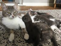 Gorgeous attractive kittens Cypriot mother avalilable 29/09