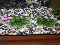 Aquarium moss on mesh 8x8 cm