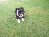 Melton Belvoir (Leics, South Notts) Pet Sitting/Dog Walking