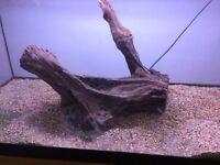 fish tank bogwood