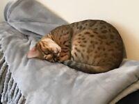 Missing catb