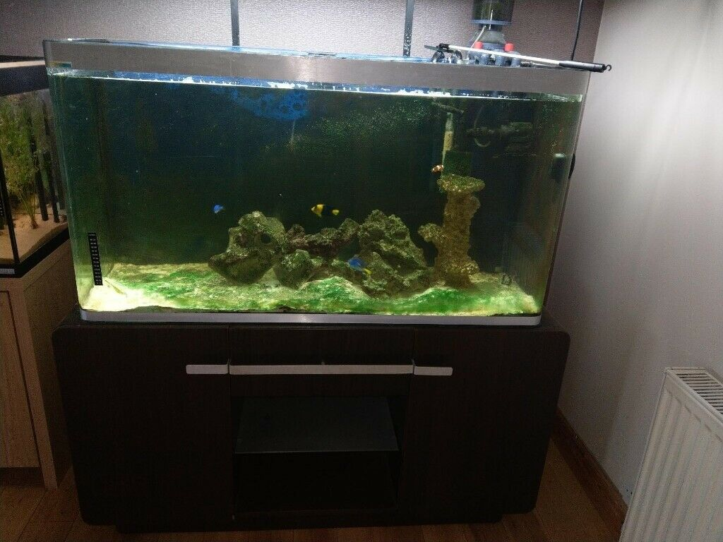 Tropical marine fish tank   in Perth, Perth and Kinross   Gumtree
