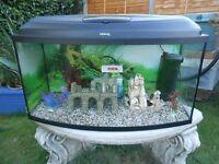 Aqueal Aquarium 115 litres Full tropical set up Stunning