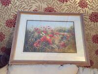 Large poppy picture lovely frame