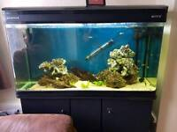 300L 4ft fish tank cabinet and contents