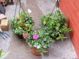 2 BASKETS, PLUS A POT, FULL OF FLOWERING PLANTS