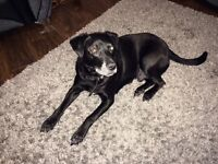 Family or retired person need for loving dog
