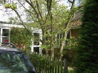 Bright house in rural village near Orford, Suffolk