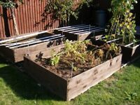 FREE Four raised bed's made of wood.