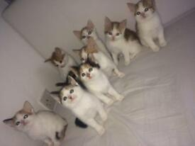 Kittens available