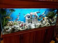 Fish items