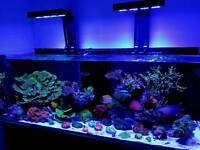 Marine aquarium setup and maintenance