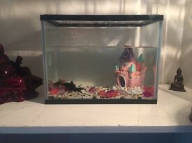 Goldfish tank with fish for sale