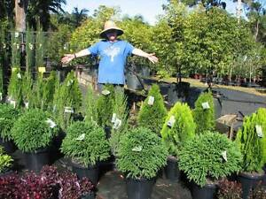 Horsehoe Drive Plant Nursery TRADE & PUBLIC Welcome! HS105 Mudgeeraba Gold Coast South Preview