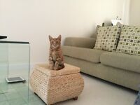 Small ginger cat missing from stotfold