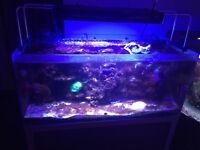 Marine fish tank & fish