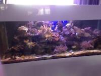 Fish tank large