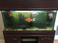 Large fish tank on nice wood stand 10 fishes included bargain