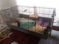 9 month old female Syrian hamster and cage