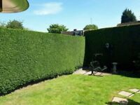 PERFECT MOWING TREES & LANDSCAPES ALL ASPECTS OF GARDENING GARDEN SERVICES