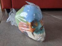 Medical skull model - FREE UK delivery