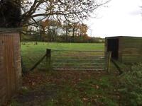 Horse grazing in Buckinghamshire