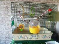 2 female zebra finches with cage