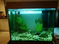 2ft Aquarium with Filter, Lighting, Heater, Gravel & Rocks