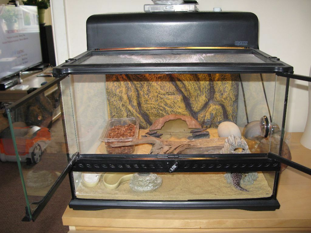 Leopard Gecko Amp Exo Terra Tank Amp Equipment In Aspley