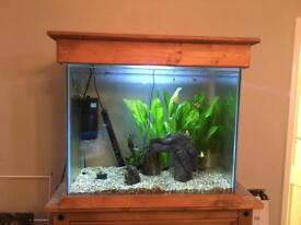 Tropical fish tank with livestock
