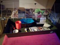 Guinea pig/rodent cage and equipment