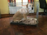 Medium Dog Crate by Pets at Home