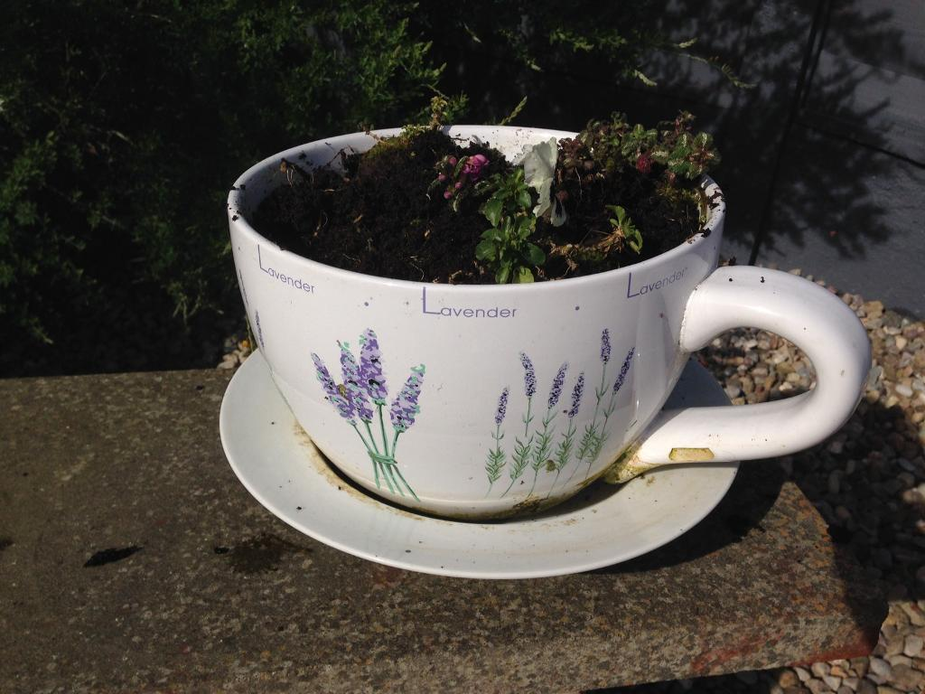 Large Cup And Saucer Garden Planter Unusual Fun In York North