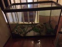 large and smaller fish tank aquarium plus Filter, Food, Cleaner, Light & Accessories