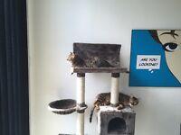 Modern Ikaros Cat Tree