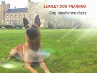 Puppy/Dog Obedience classes. Also 121 training. Limited places available in classes held in Lumley.