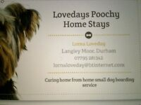 Lovedays Poochy Dog Stays, Home from home small dog boarding