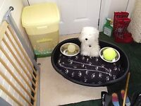 LARGE PLASTIC AIR VENTED DOG BED