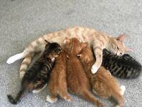 Gorgeous kittens READY next weekend 400 ONO
