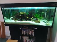 240 litre fish tank and cabinet