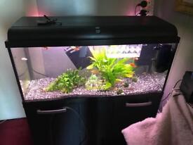 Interpret 160 fish tank & cabinet