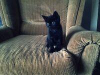 Adorable kitten!!!!