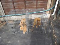 Medium dog crates(2) shaped to fit piccasso