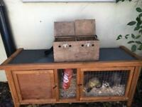 1 male and 1 female ferret, hutch and double ferret carry box.