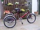 Pashley Tri-1 Adult Trike for sale, 7 speed,  in as new condition.
